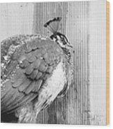 Peafowl Wood Print