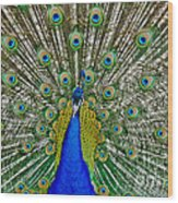 Peafowl Peacock Wood Print