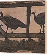 Peahens Wood Print