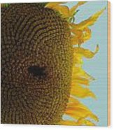 Peak A Boo Sunflower Wood Print