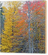 Peak And Past Foliage Wood Print
