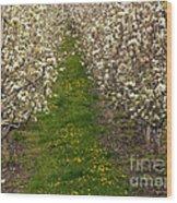Pear Blossom Lane Wood Print
