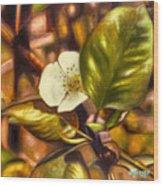 Pear Blossom Wood Print