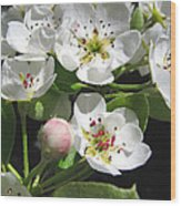 Pear Blossom Special Wood Print