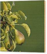 Pear Tree Wood Print