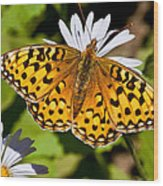 Pearl Border Fritillary Butterfly On An Aster Bloom Wood Print