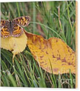 Pearl Crescent Butterfly On Yellow Leaf Wood Print