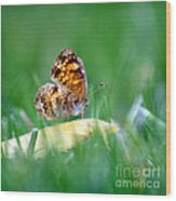 Pearl Crescent Butterfly Square Grass Wood Print