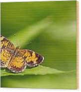 Pearl Crescent Notecard Wood Print