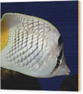 Pearlscale Or Yellow-tailed Butterflyfish Wood Print