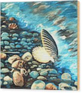 Pebble Beach And Shells Wood Print