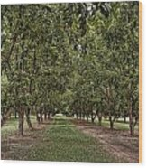 Pecan Orchard Sahuarita Arizona Wood Print