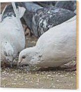 Pecking Pigeons Wood Print