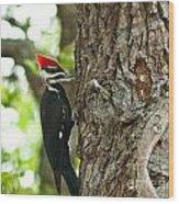 Pecking Woodpecker Wood Print