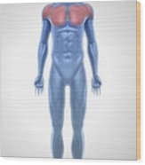 Pectoral Muscles Wood Print