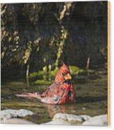 Pedernales Park Texas Bathing Cardinal Wood Print