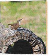 Pedernales Park Texas Carolina Wren Wood Print