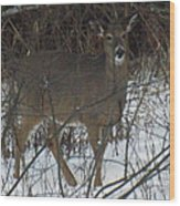 Peek A Boo Deer Wood Print