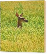 Peek A Boo Deer Wood Print
