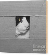 Peek A Boo Kitty Wood Print