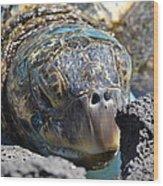 Peek-a-boo Turtle Wood Print