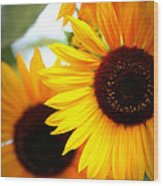 Peekaboo Sunflowers Wood Print