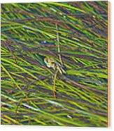 Peeking Crab Wood Print by Sarah Crites