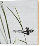 Peeking Frog Wood Print