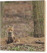 Peeking From The Fox Hole Wood Print
