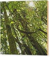 Peeking In Costa Rica Rain Forest Wood Print