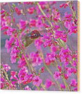 Peeking Through The Pink Penstemons Wood Print