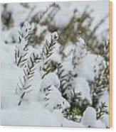Peeking Through The Snow Wood Print