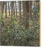 Peeking Through The Trees Wood Print