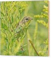 Peeking Warbler Wood Print