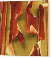 Peeling Bark Pacific Madrone Tree Washington Wood Print