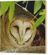 Peering Barn Owl Wood Print