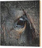 Peering Out Wood Print
