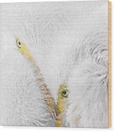 Peering Thru Feathers Wood Print