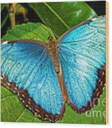 Peleides Blue Morpho Wood Print