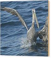 Pelican 2 Wood Print