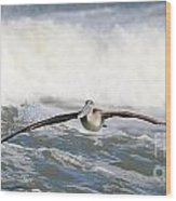 Pelican 4057 Wood Print