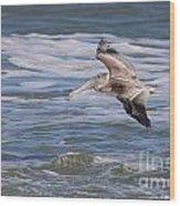 Pelican 4081 Wood Print