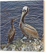 Pelican And American Black Duck Wood Print