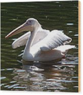 Pelican And Friend Wood Print