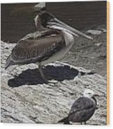 Pelican And Gull Wood Print
