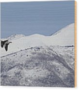Pelican And Mountains Wood Print