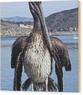 Pelican At Avila Beach Ca Wood Print