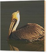 Pelican At Dark Wood Print