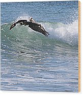 Pelican At Playa Grande Wood Print