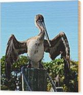 Pelican At Rest Wood Print